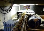 Linia do sortowania siewki pomidora